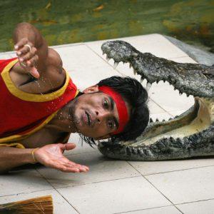 shou-krokodilov-tailand