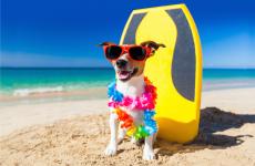 Пляжи Кипра: вход с собаками запрещен